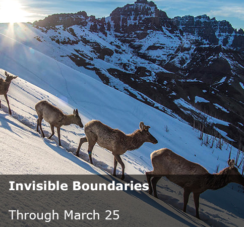 Invisible Boundaries: Exploring Yellowstone's Great Animal Migrations